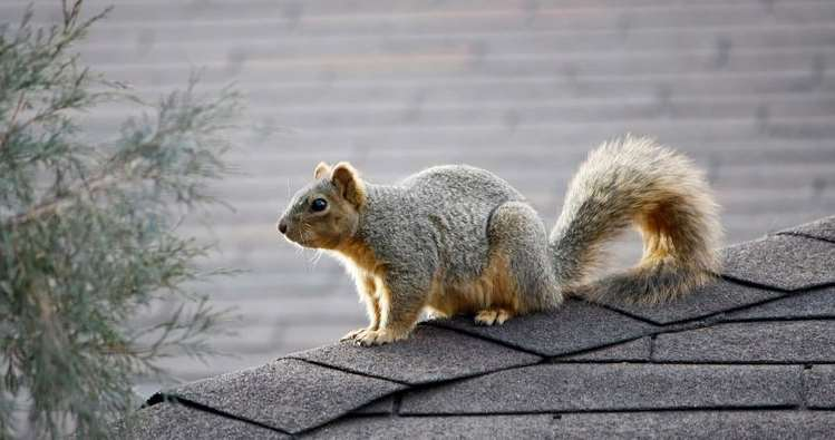 Chimney Animal Removal New Jersey Dryer Vent Cleaning Central New Jersey